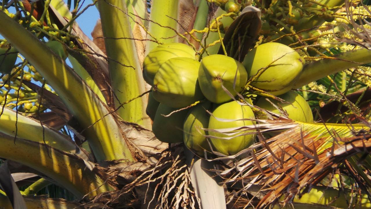 coconut-214732_1280